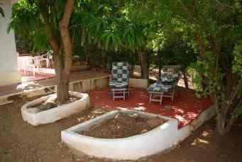 Onze tuin onder de mangoboom