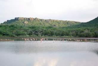 Flamingo area