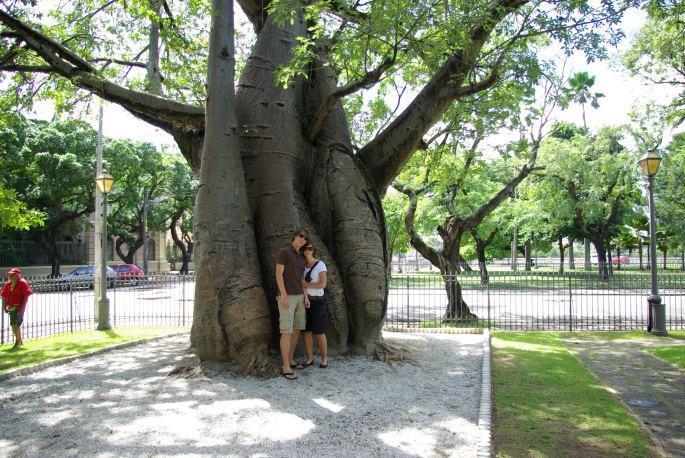 Recife, Baobab boom