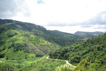 Uitzicht over het regenwoud
