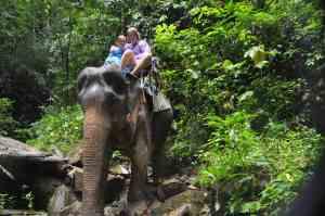 Op de olifant door de jungle