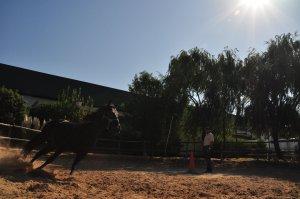 Paardenmanege bij de bodega