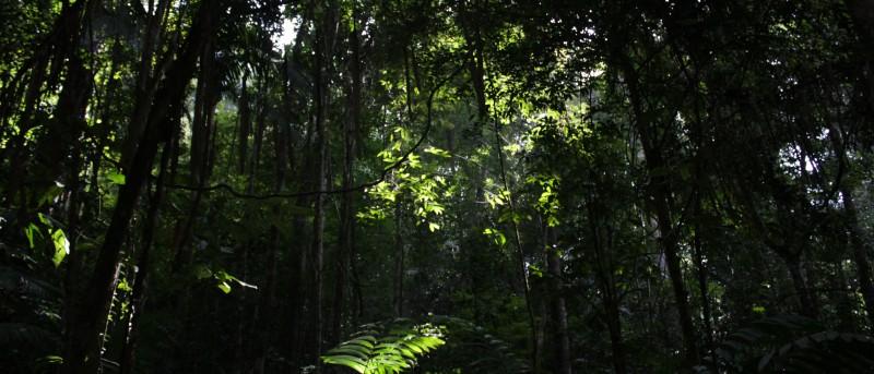Het oudste regenwoud ter wereld