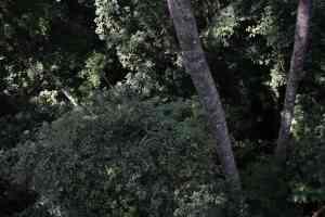 Hoog in de boomtoppen