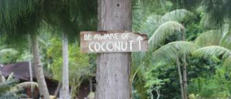 Pas op voor de kokosnoten