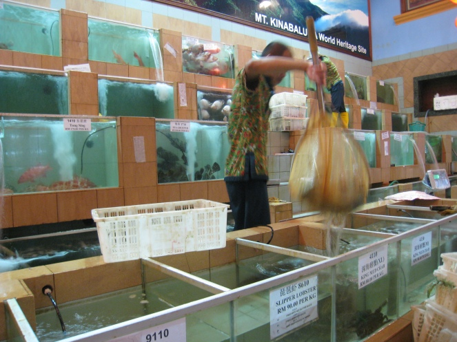 Chinese aquaria, kies je avondeten