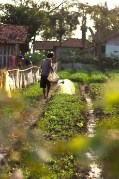 Boer op het land in Bekasi