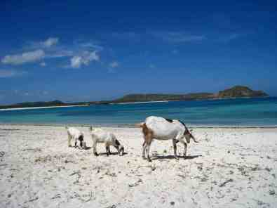 Ongerept strand in Kuta