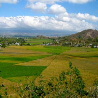 Spider web rice field