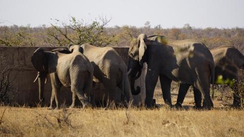 Kruger NP, onze eerste olifanten, bij de waterput, big five #1