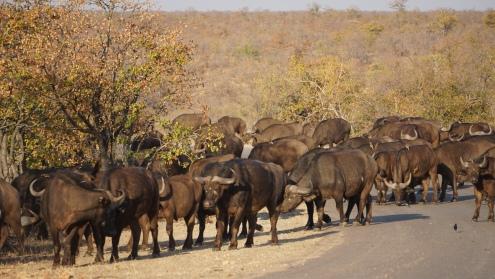 Kruger NP, file