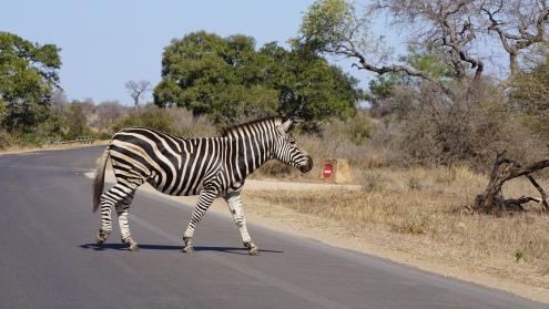 Kruger NP, zebrapad ;)