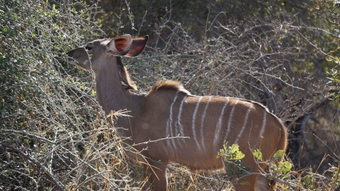 Kruger NP