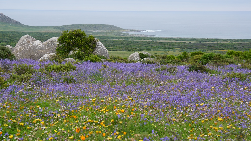 West Coast NP, de beloofde bloemen..