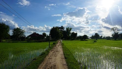 Don Det, fietstocht door de rijstvelden