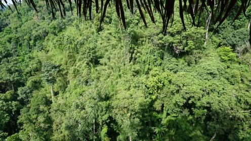 Uitzicht vanuit treehouse #1