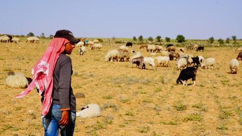 Met de schapenhoeders op pad