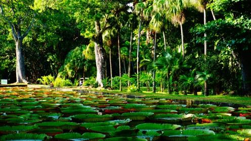 Pamplemousse, botanic garden