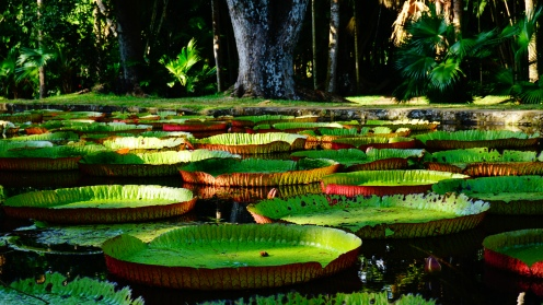 Pamplemousses, botanic garden