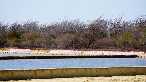 Zoutvlakte bij Belo sur Mer