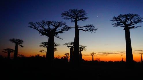 Allée des Baobabs zonsopkomst