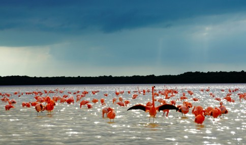 Celestún Biosphere Reserve